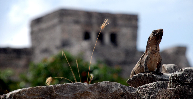 tulum-lagarto-maya-primero